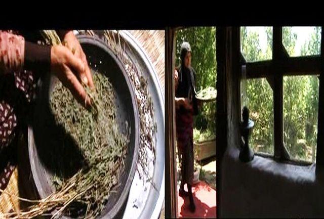 «کیمیا» از خواص گیاهان دارویی استان گیلان می گوید