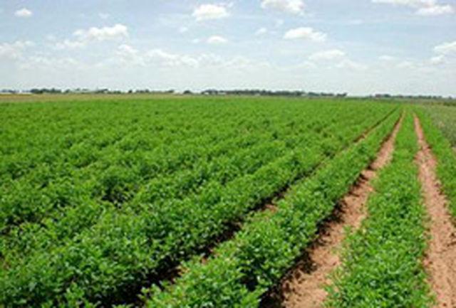 تولید بیش از ۱۵۹ هزار تن انواع محصولات باغی از باغات شهرستان میاندوآب