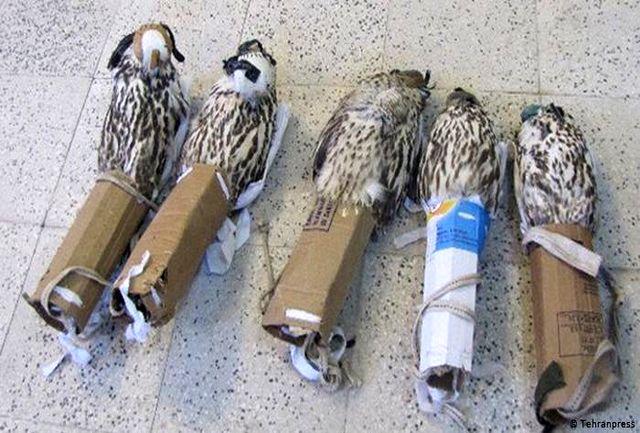 شناور حامل ۱۲۱ پرنده شکاری قاچاق در آبهای دیر توقیف شد