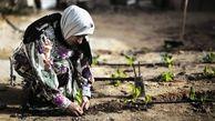 کنفرانس منطقهای فائو در خاور نزدیک با حضور ایران و با تمرکز بر چالشهای ناشی از بیماری ویروس کرونا برگزار شد