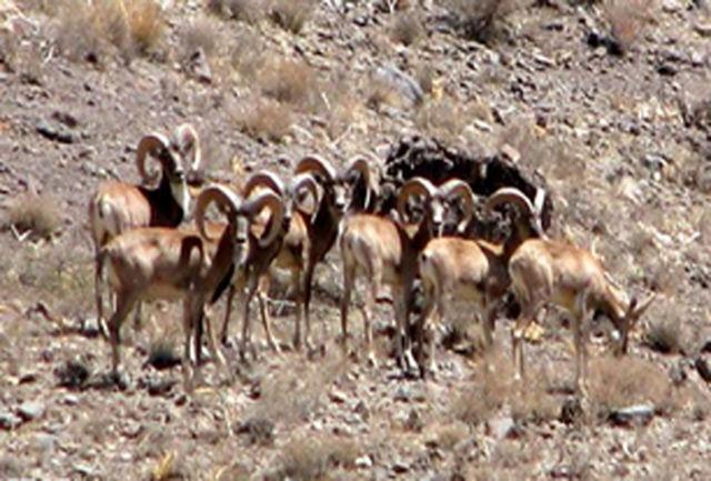 افزایش 15 درصدی جمعیت حیات وحش استان