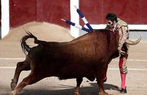حمله بیرحمانه گاو وحشی به زن عکاس+ عکس