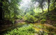 پایان مطالعات طرح توجیحی بهرهبرداری از پارک ملی گلستان