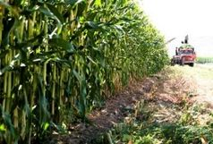 همایش بهبود جایگاه کشاورزی در آران و بیدگل برگزار شد