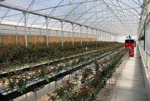 فعالیت ۱۵۲واحد گلخانه ای در آذربایجان غربی