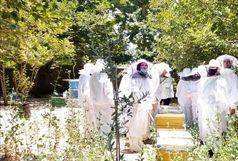 طرح توانمند سازی زنان زنبوردار روستایی و عشایری در شیراز