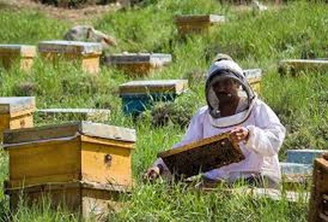 جمع آوری بیش از ۳۱۵ هزار کیلو عسل از زنبورستان های البرز
