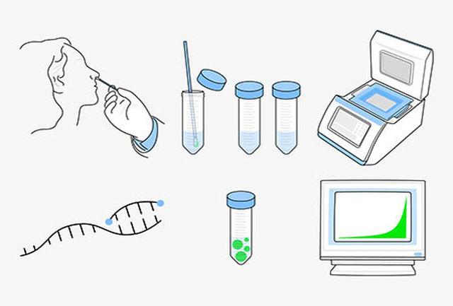 تست PCR برای تشخیص کرونا چقدر دقیق است؟